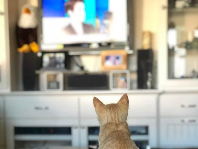 kitten sitting in front of tv
