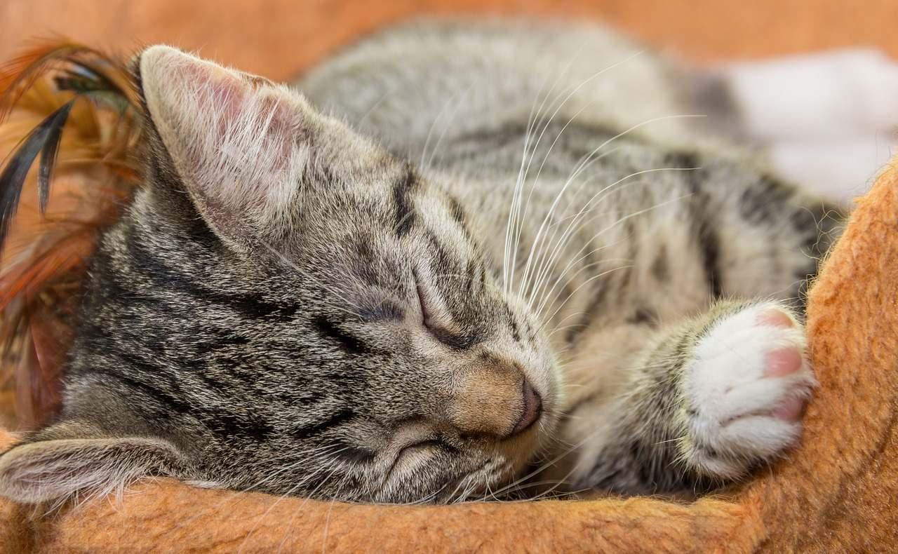 goodnight in german cute cat sleeping