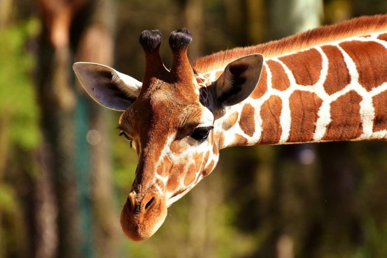 80+ Amazing Animals in German [That You Need To Know]