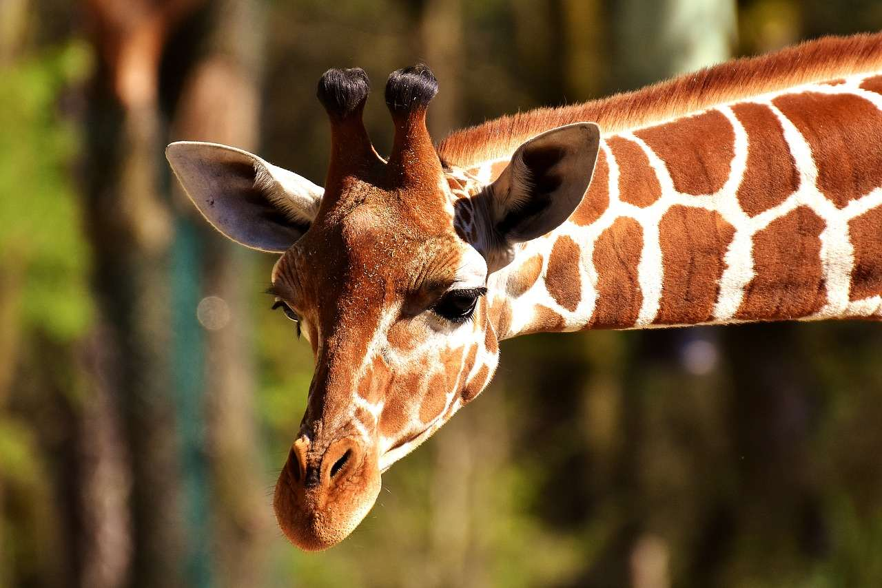 animals in german giraffe